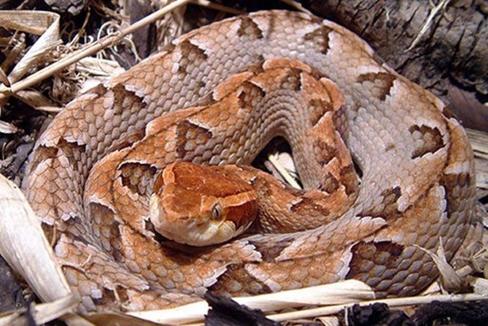 Các loài rắn ở Việt Nam