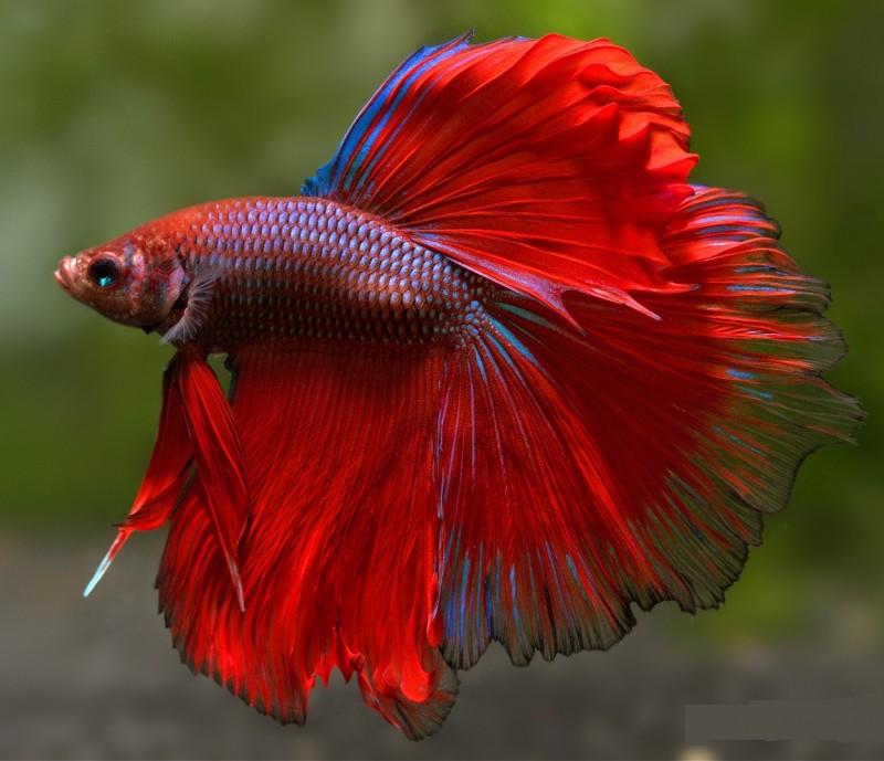 Các loại cá dễ nuôi