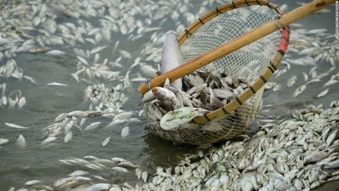 Ô nhiễm môi trường biển miền trung làm cá chết hàng loạt