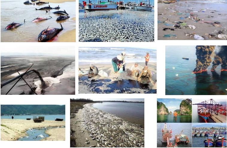 Nguyên nhân gây nên ô nhiễm môi trường biển